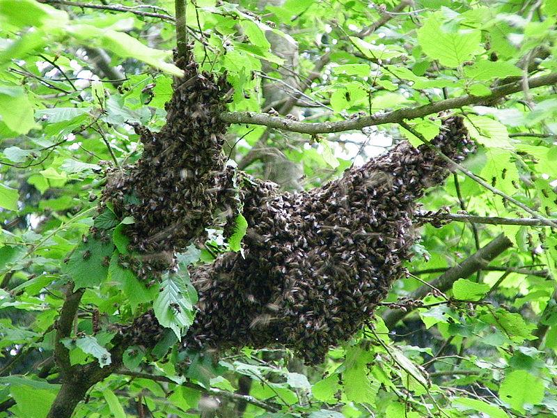 un essaim dans la nature