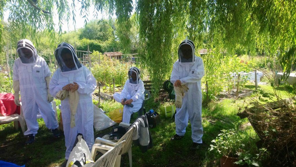warre.Fr : Les nouveaux apiculteurs à l'oeuvre!